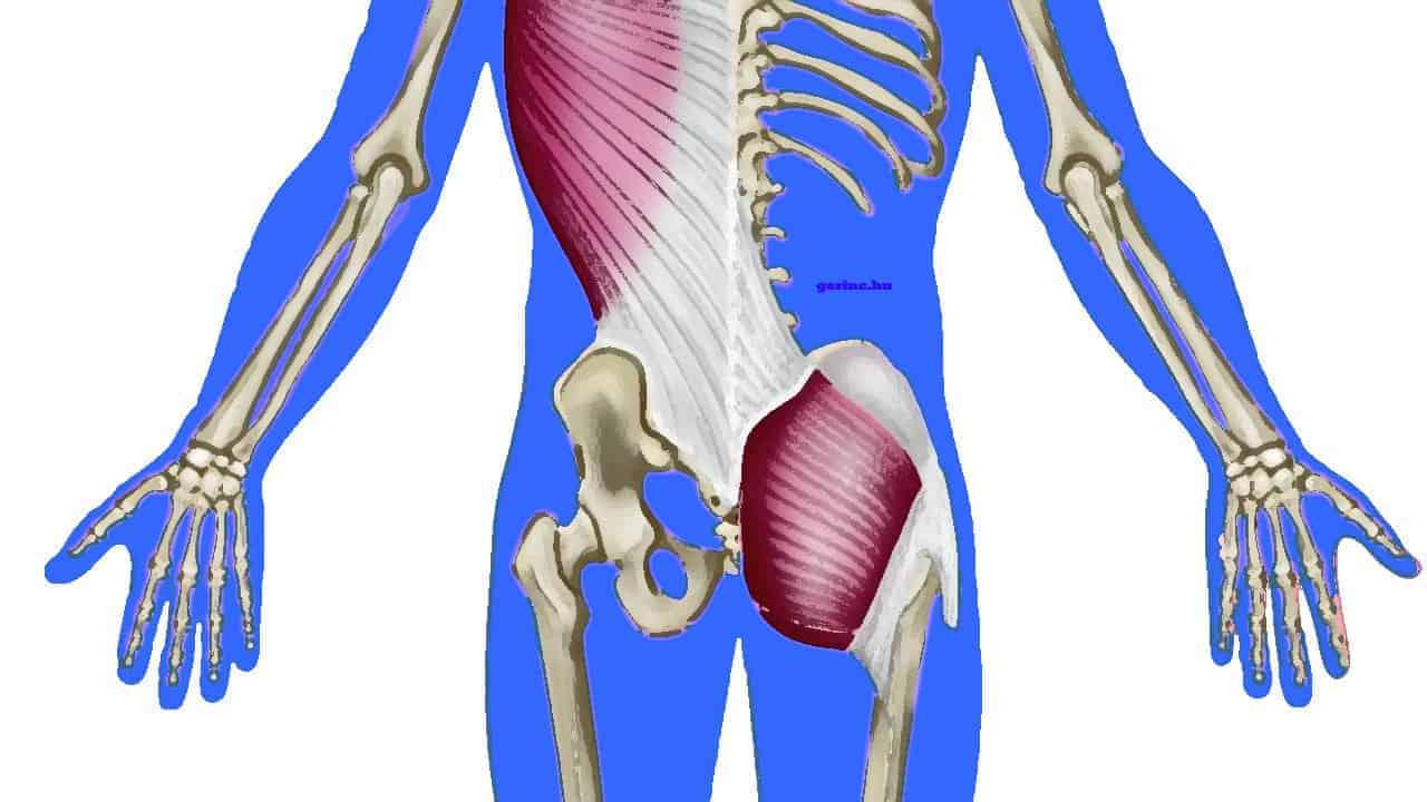 Sling - rendszerek: erőátviteli rendszerek a test szövetein. 4