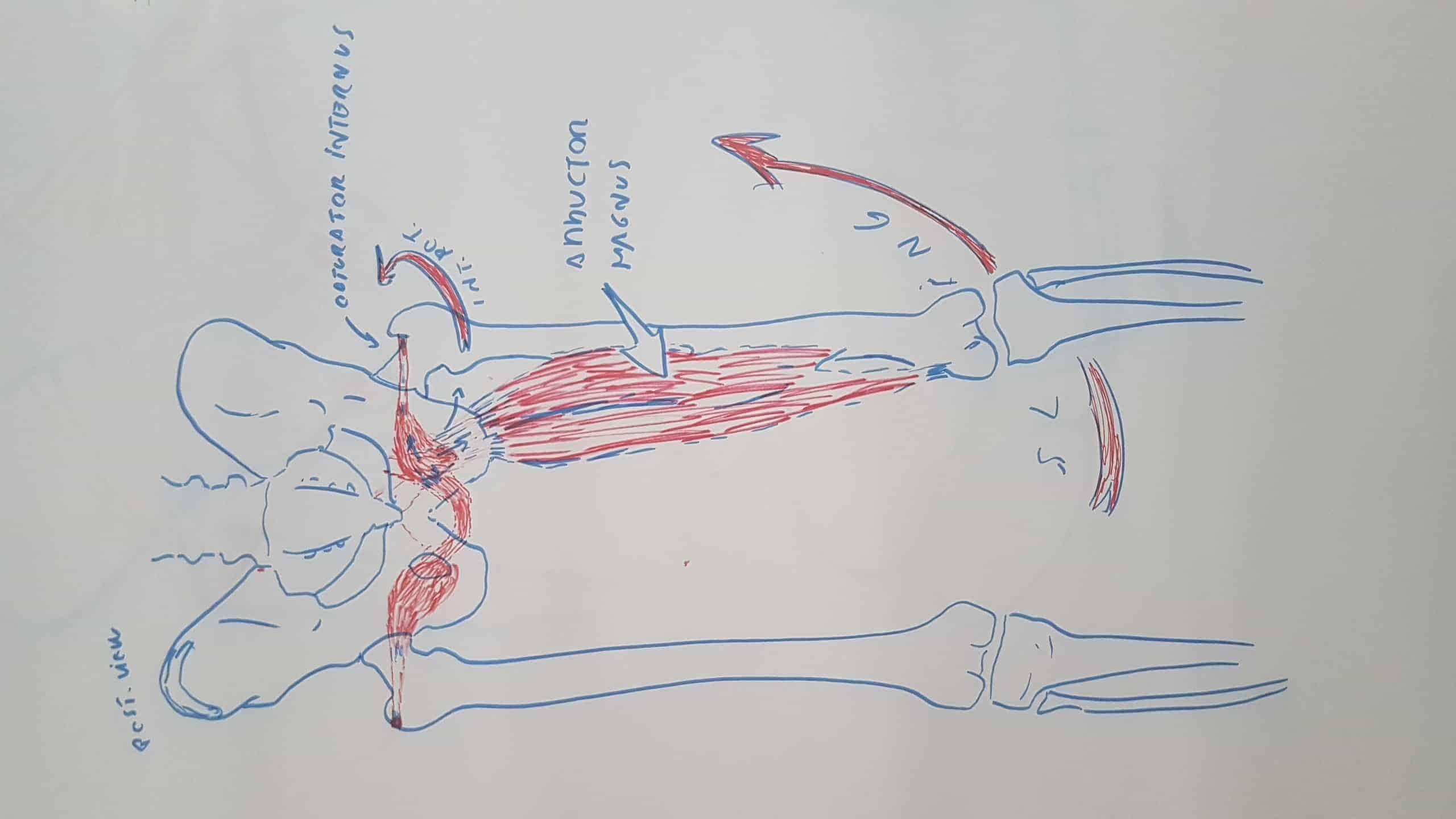 Anatómia workshop 5