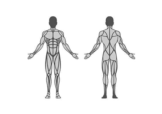 képzés-BGA-anatómia